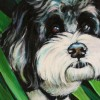 Pet Portrait: Sadie in the Garden
