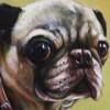 Pet Portrait: Kiki