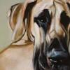 Pet Portrait: Nola